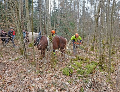 2017-06-25 Projekt Waldarbeit
